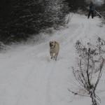 bezky-leden-2010-006