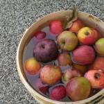 jablka-v-kybliku