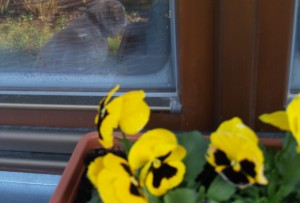 jaro-v-okne