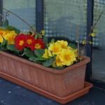 jaro-v-okne2
