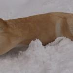 snehova-slast