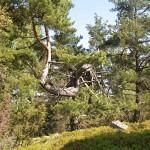 strom-kyve-pahyly